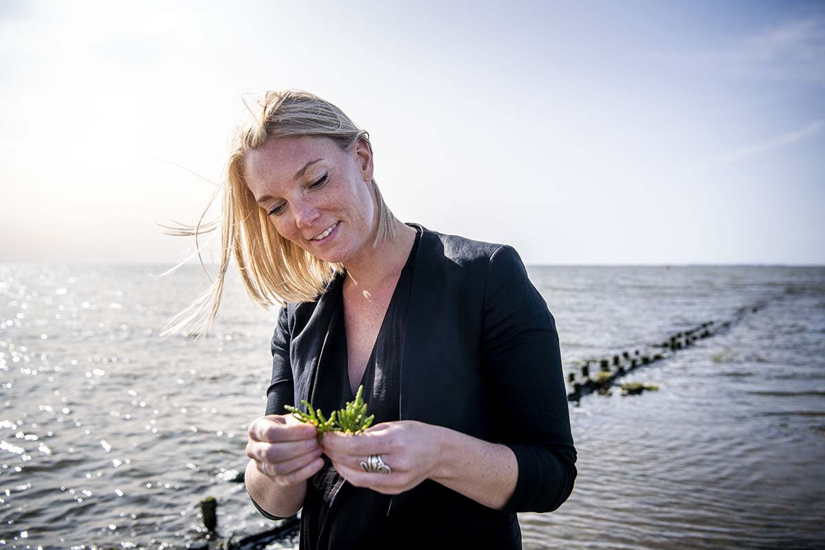 Fokus på Tøndermarskens urter og fødevarer